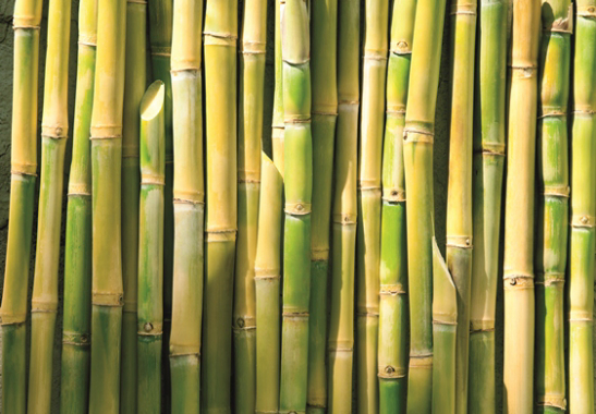 Sugar Cane (source UNICA Brasil) is being used by Tetra Pak in all of its manufactured packaging in Brazil.