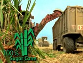 Veritiv sugar cane