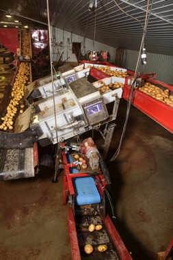 Two Bulk Potato Retract metal detection systems used by Monaghan Farms at its Prince Edward Island facility, are specially-designed from a basic Phantom metal detection unit specifically for the potato processing market segment.