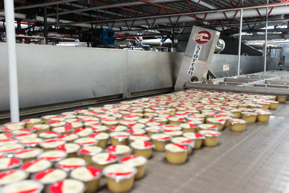 Prior to being moved to a cooling zone, single-serving cups of applesauce processed at Leahy Orchards for a third-party customer await their turn on a Storcan accumulation table supplied by systems integrator StrongPoint Automation.