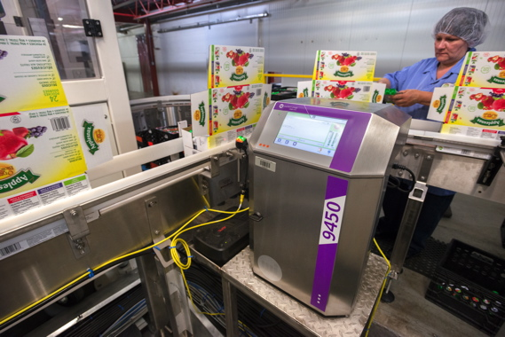 A Markem-Imaje 9450 small-character inkjet printer applies lotcode data and best-before information to cases of 24-pack Applesnax applesauce, as a Leahy Orchards production line employee performs a random quality check on a product pouch.