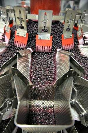 Local growers supply Quebec Wild Blueberries with an annual harvest of 65 million pounds of wild blueberries for shipment to over 30 countries.