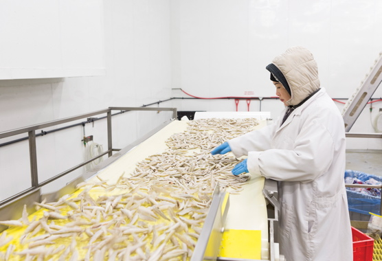 The pack room's line workers constantly inspect raw frozen smelt making its way toward the packaging area to remove any broken or deformed pieces of the processed smelt before they make their way up to the automatic weighscales located overhead.