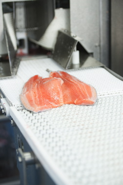 Two sides of the same fish after being filleted by the Marel Food Systems model PortionCutter I-Cut 10 fillet portioning machine at the John O's Foods plant.