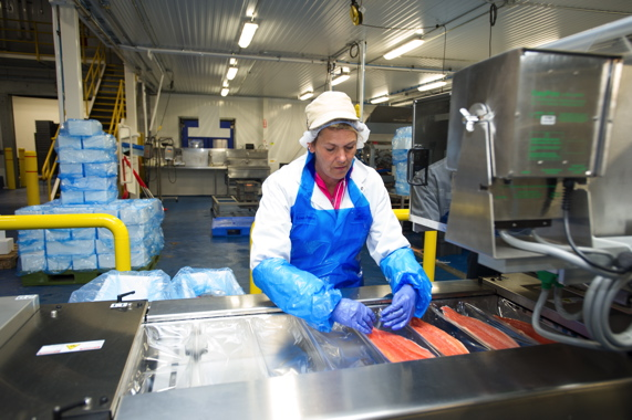 A plant employee at the John O's Foods fish processing plant hand-loading the single fillets of trout onto the bottom layers of individual film trays processed on the company's new high-performance Multivac R 105 thermoformer.
