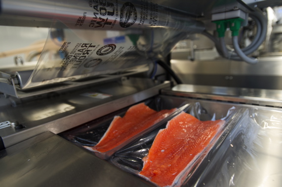 Fresh fillets of trout are placed in the lower tray of the R 105 thermoforming machine, designed and manufactured by Multivac, to create a hermetic seal around the fish to maintain fish color, texture and taste, while effectively locking in any fishy scent inside.